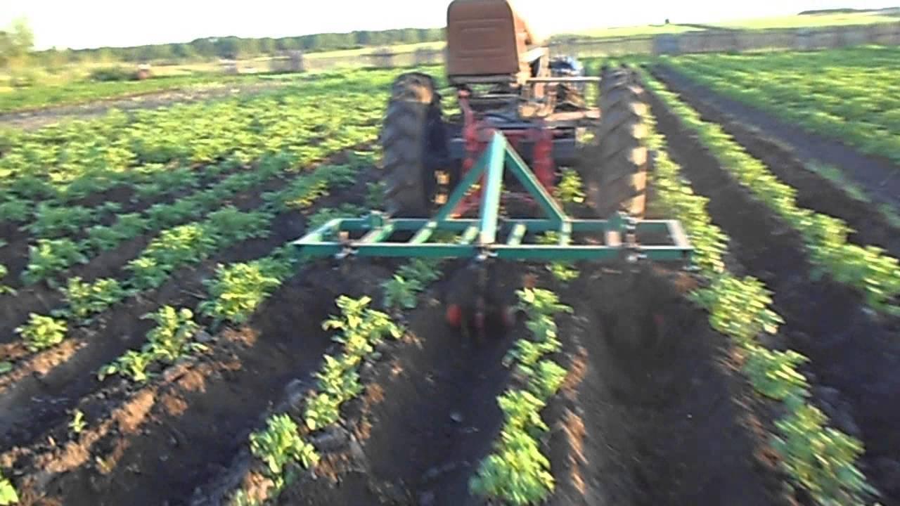 Как правильно окучивать картофель?