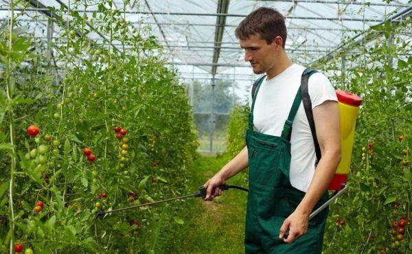 Подкормка растений янтарной кислотой в таблетках — применение в садоводстве, огородничестве и комнатном цветоводстве
