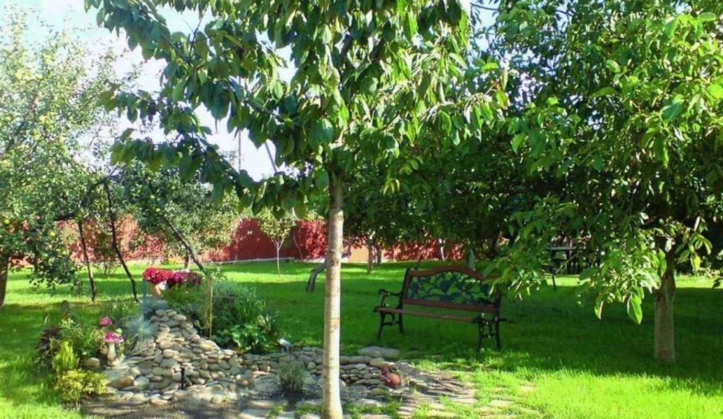 О совместимости плодовых деревьев и кустарников в саду: соседство, таблица