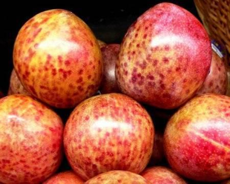 Шарафуга – гибрид сливы, абрикоса и персика