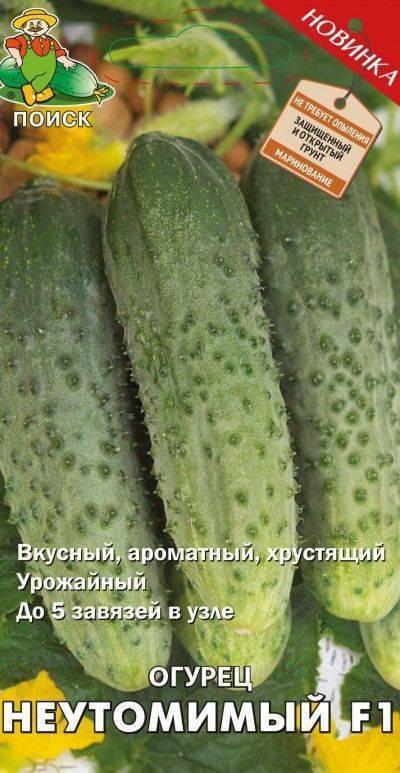 Огурец арктика f1 (арена f1): описание, отзывы, фото, урожайность, особенности выращивания