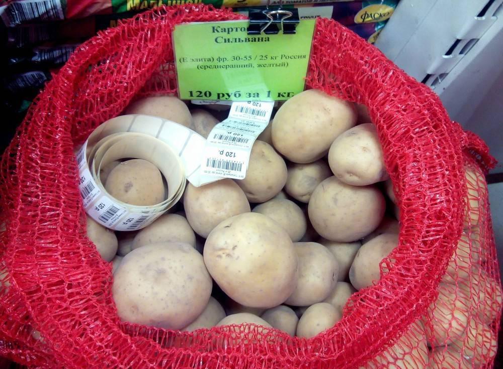 Картофель манифест: характеристика и особенности выращивания сорта