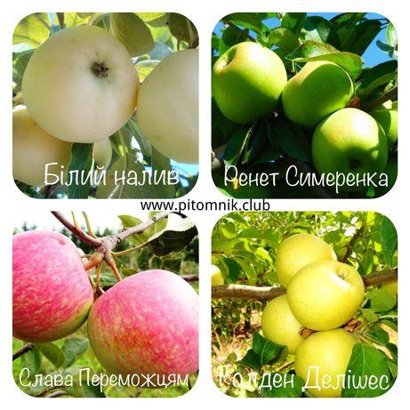 Особенности выращивания и ухода за яблоней райское яблоко