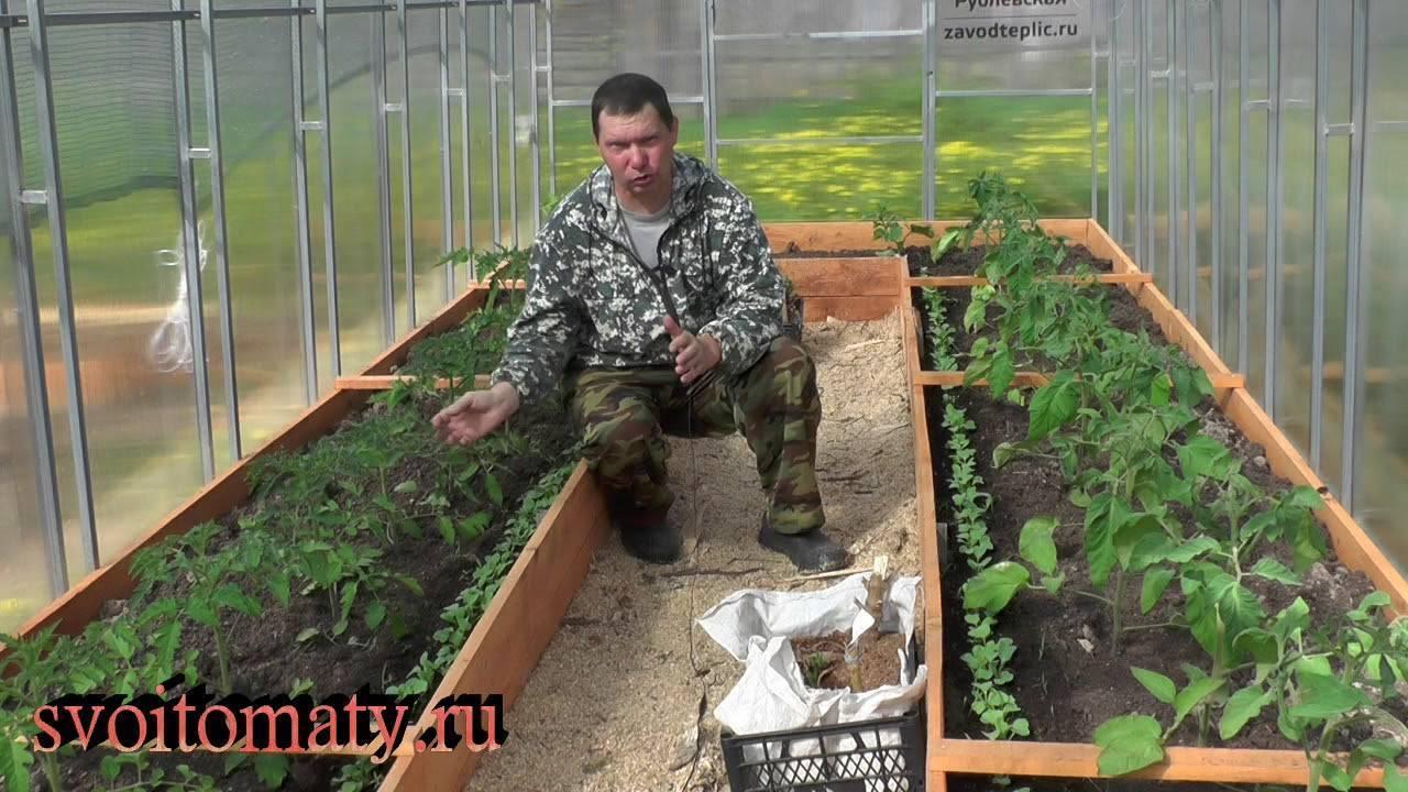 Чем подкормить перец и баклажаны после высадки в грунт — лучшие рецепты и советы по выбору метода подкормки (105 фото)