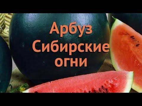 Лучшие сорта арбузов для сибири