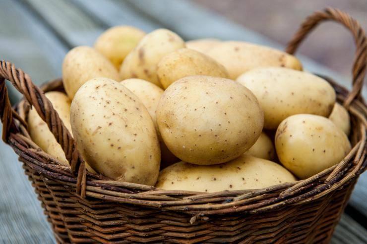 Картофель для Сибири: лучшие ранние сорта, какие выбрать, как проращивать