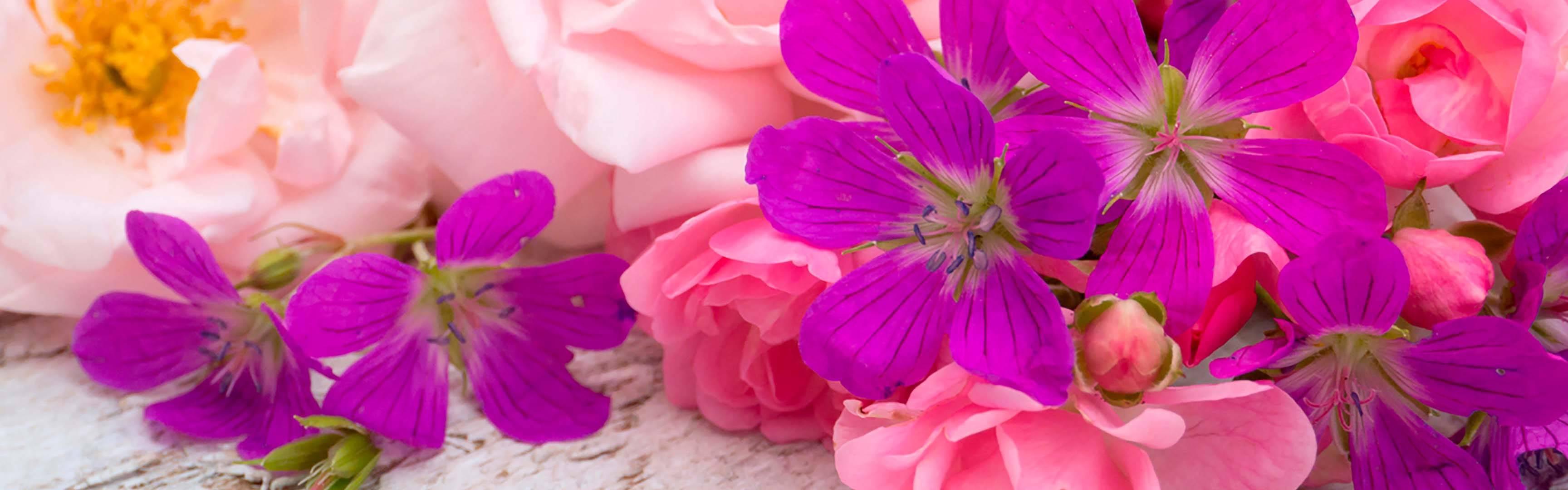 Топ – 19 неприхотливых долгоцветущих многолетников с фото