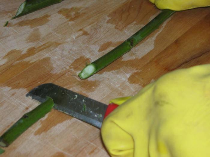 Причины, почему не распускаются бутоны у орхидеи