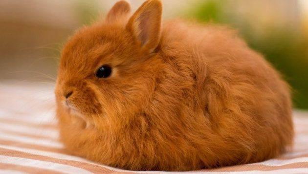 Глисты у кроликов: симптомы и лечение