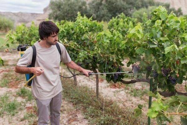 Борная кислота – удобрение для приумножения урожая