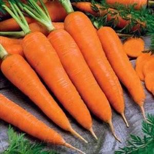 Семена моркови поиск «королева осени» — отзывы. негативные, нейтральные и положительные отзывы