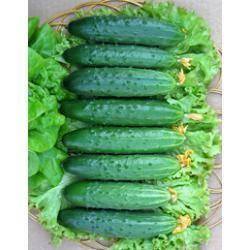 Все о сорте огурцов эстафета : агротехника выращивания в теплице и грунте