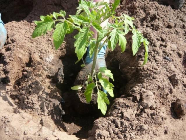 Парник для помидоров своими руками, несколько вариантов несложных парников, их фото