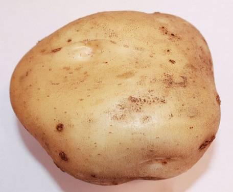 Описание и характеристики сорта картофеля голландка