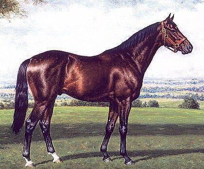 Английская чистокровная верховая лошадь: характеристика породы