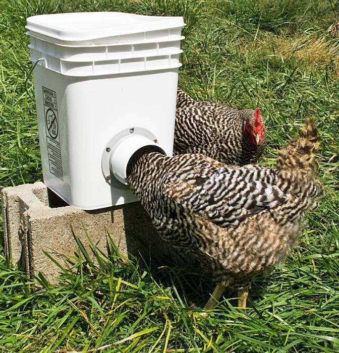 Как самостоятельно сделать поилки для кур и цыплят?