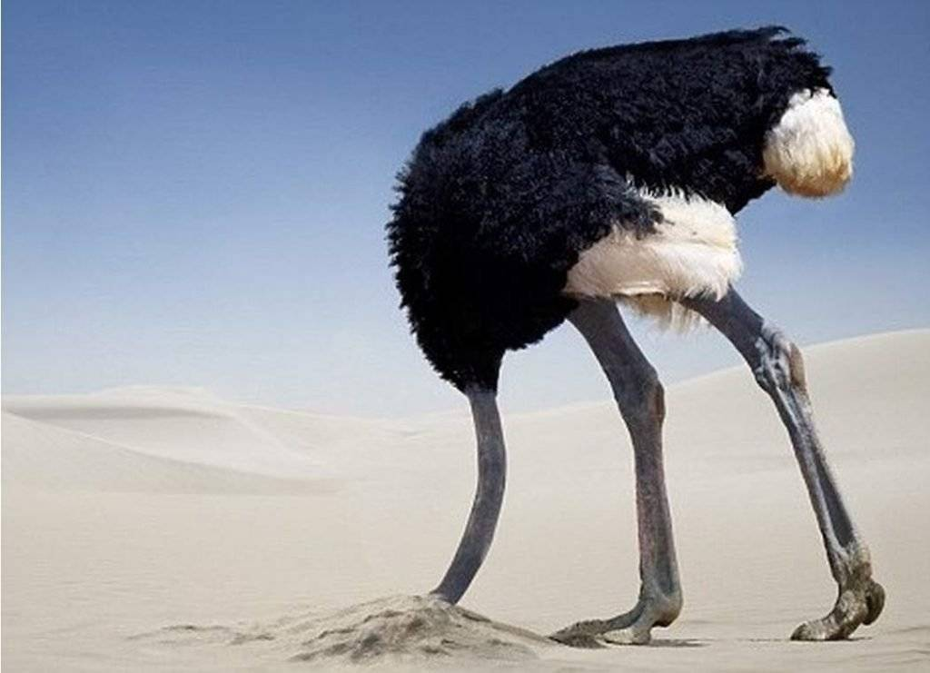 Испуганный страус. зачем страусы прячут голову в песок и другие мифы о животных