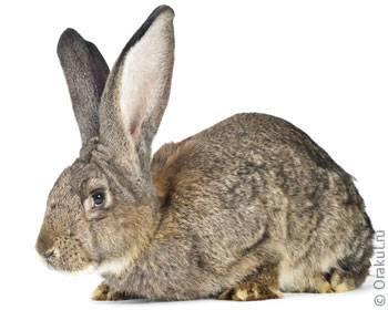 Как забить кролика? отбор кроликов и методы убоя