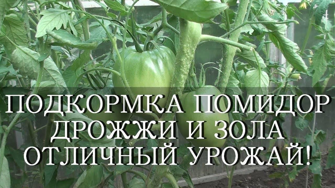 Подкормка рассады томатов и перца: эффективный способ