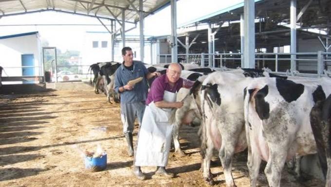 Сколько литров молока даёт корова в сутки