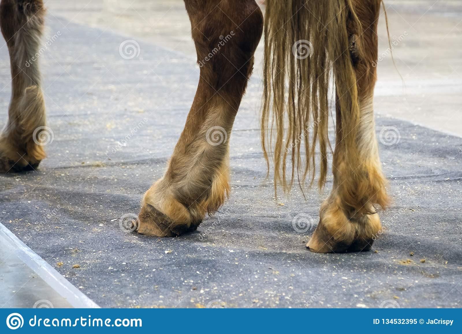 Копыто у лошади: из чего состоит, как ухаживать и чистить