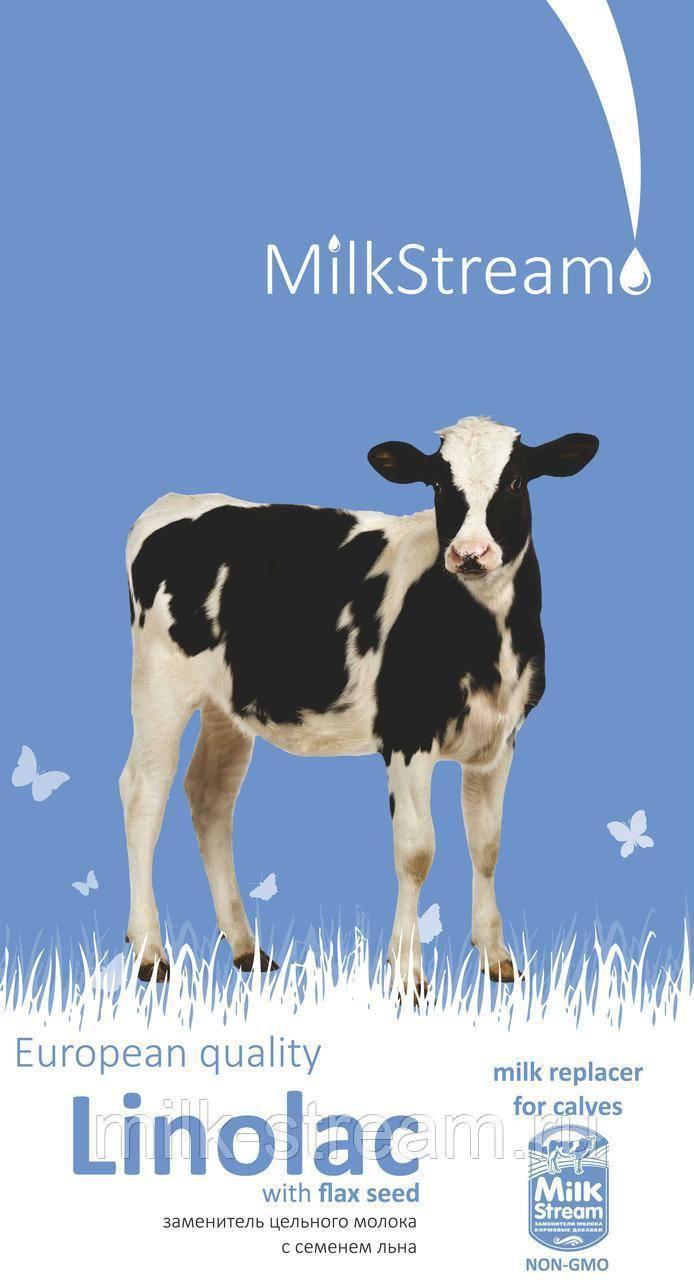 Кормление телят до 3 месяцев. цельное молоко или зцм для телят?