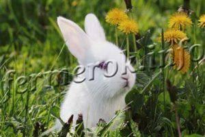 Можно ли кроликам морковную ботву