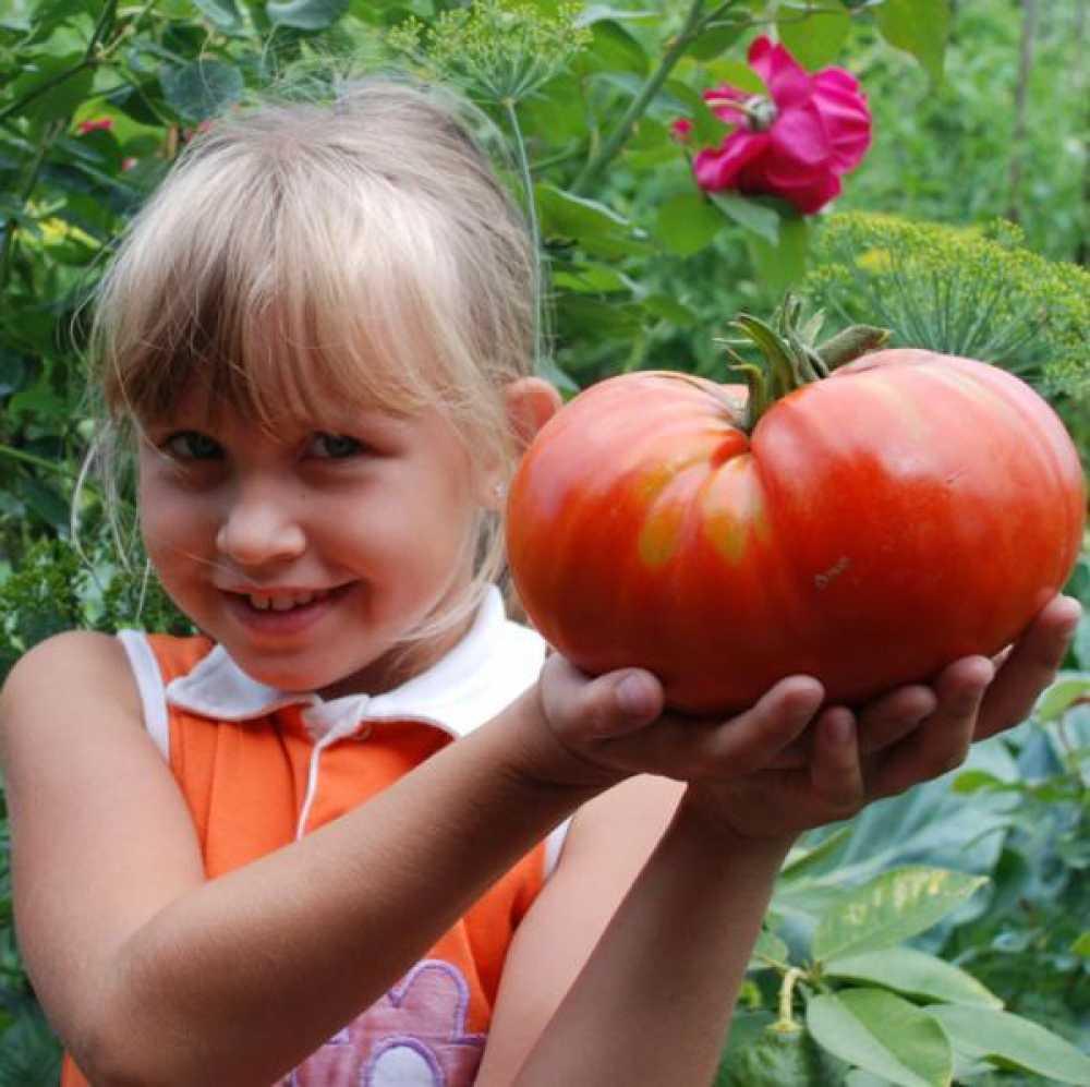 картинки день томатов цветов вселенной недоступны