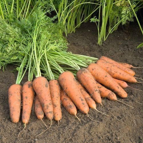 Овощные тенденции 2020: каким сортам овощей отдать предпочтение в новом году?