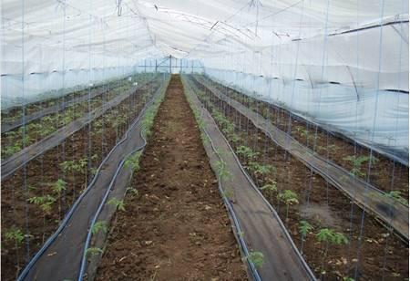 Выращивание томатов в теплице из поликарбоната от а до я: секреты хорошего урожая помидоров, особенности агротехники и полива и как правильно выбрать сорта?