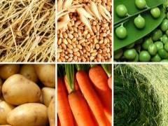 Что едят лошади: список разрешенных продуктов, обзор кормов, основные правила кормления
