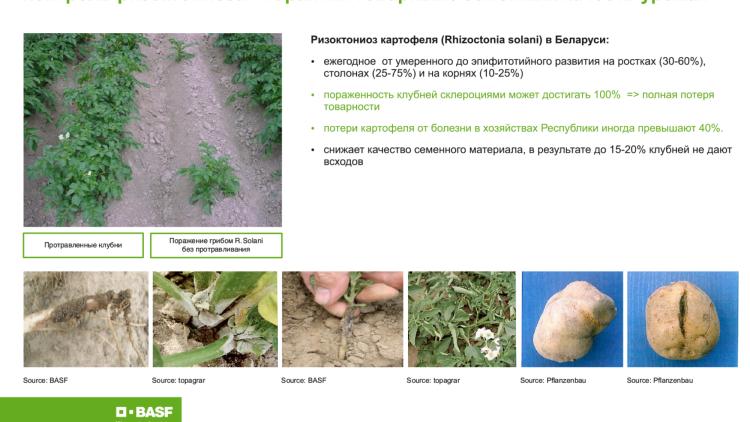 Фунгицидные меры борьбы с фитофторозом, альтернариозом, фитофторой картофеля
