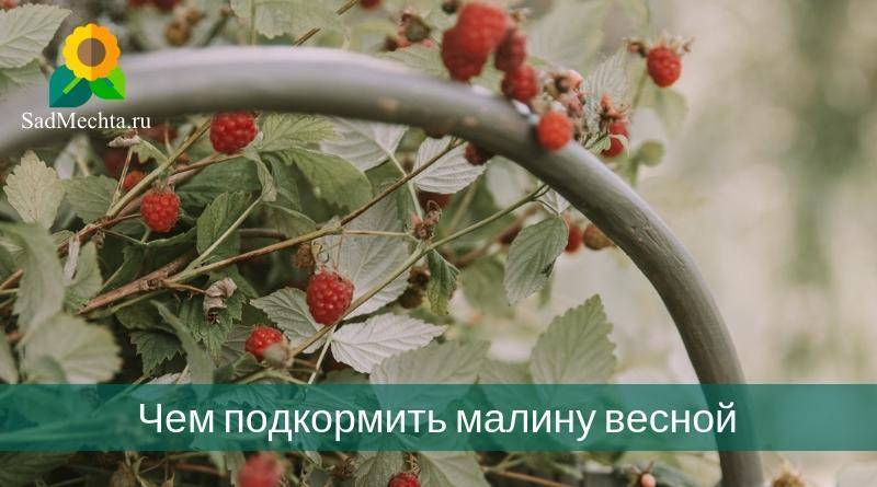 Подкормка малины