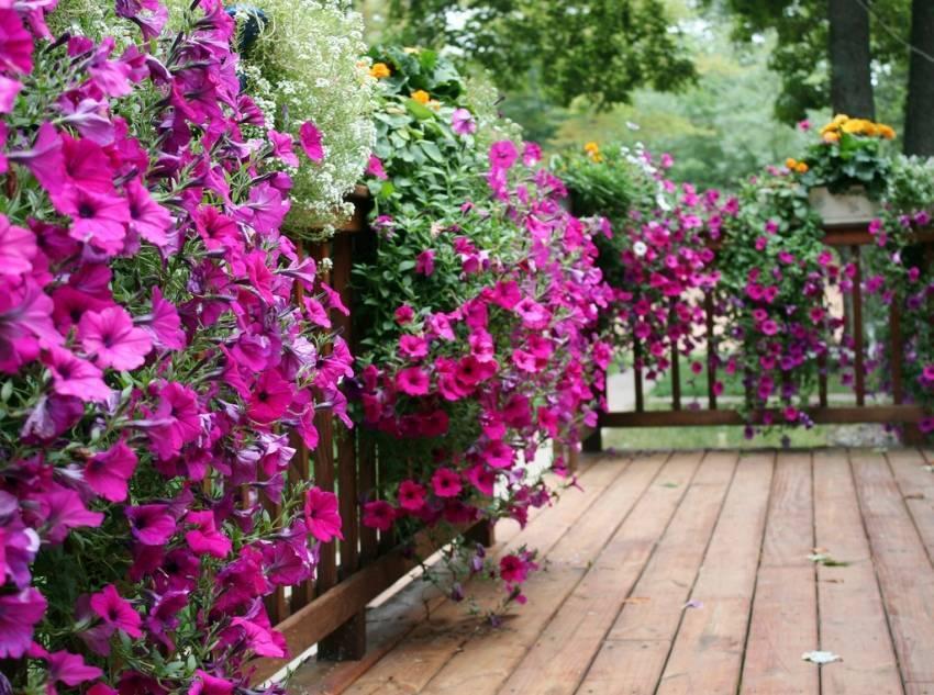 Вьющиеся цветы для сада: инструкция по посадке, названия с фото