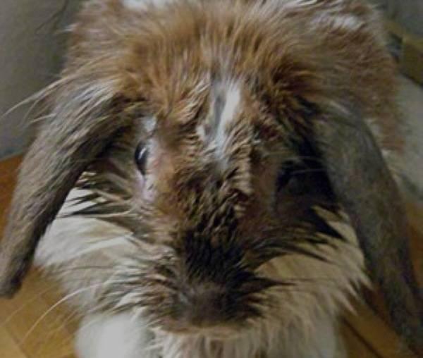 Заболевания кроликов и методы борьбы с ними