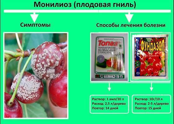 Монилиоз вишни: причины появления и лечение болезни