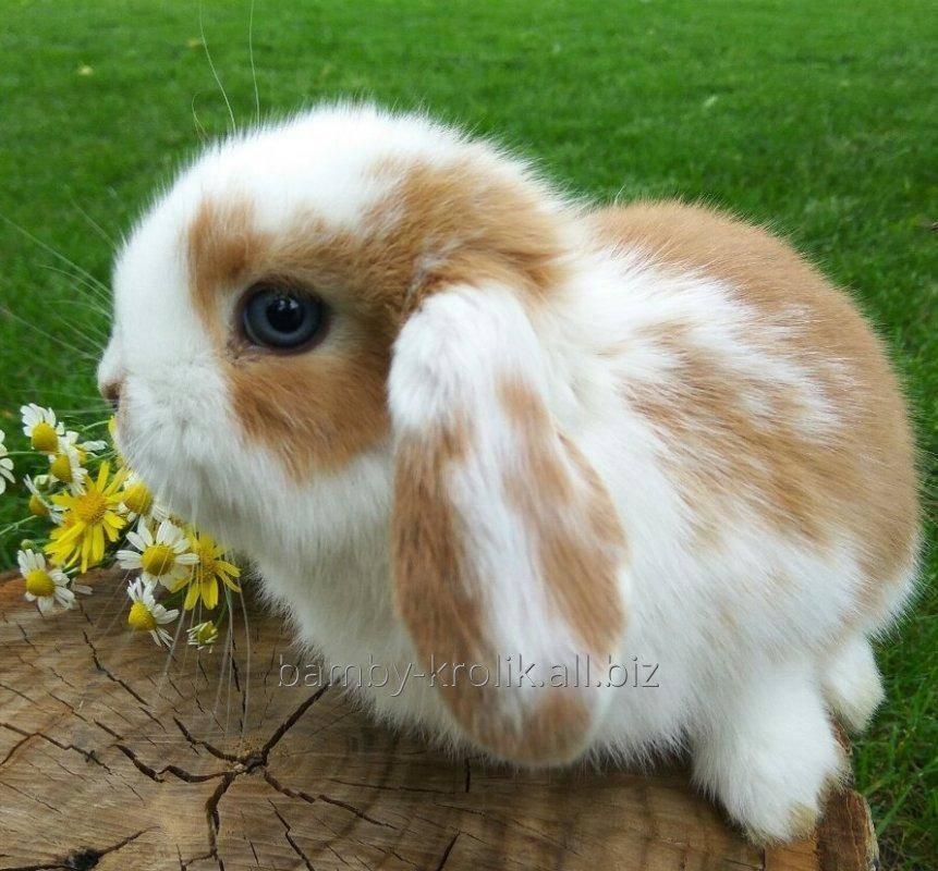 Кролиководство - что нужно знать для разведения кроликов