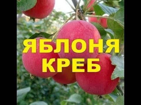 Яблоня декоративная: описание видов, посадка и уход
