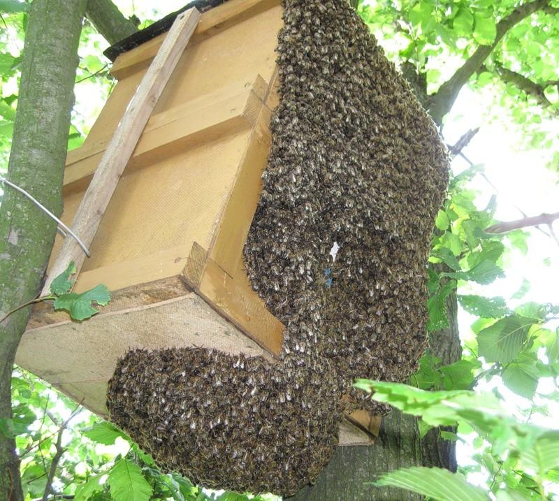 картинки ловушек на пчел печальное заявление, всей
