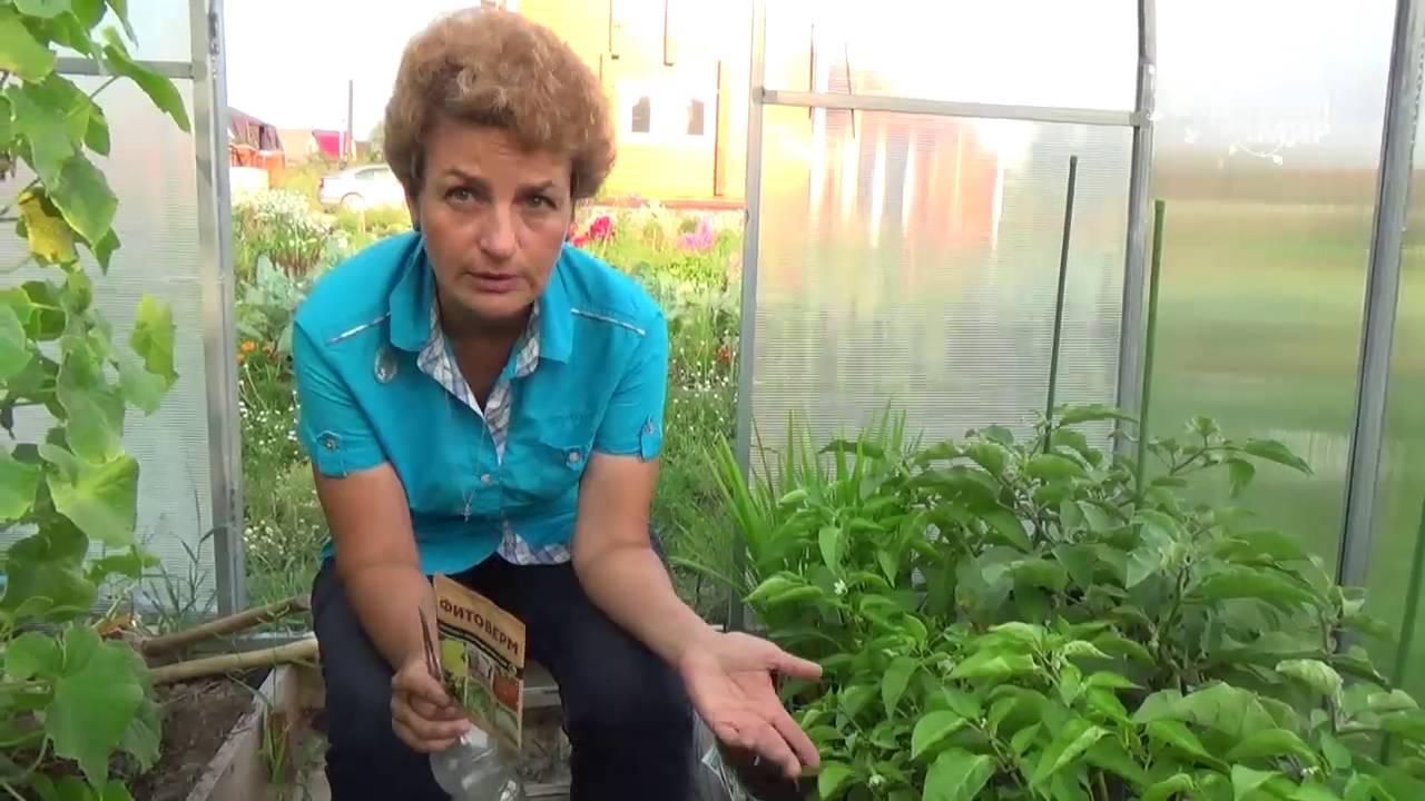 Как избавиться от белокрылки на рассаде и не допустить ее появление в будущем