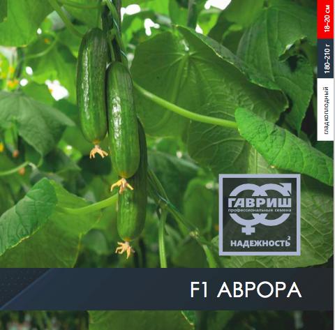 Огурец мамлюк – 8 особенностей и 12 советов по выращиванию и уходу