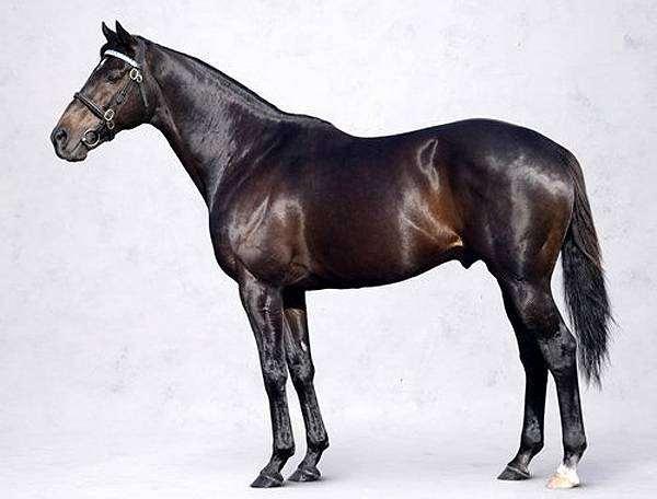 Самые известные боевые кони
