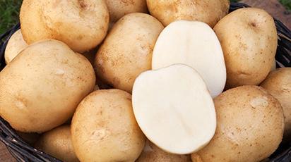Как вырастить хороший урожай картофеля на даче