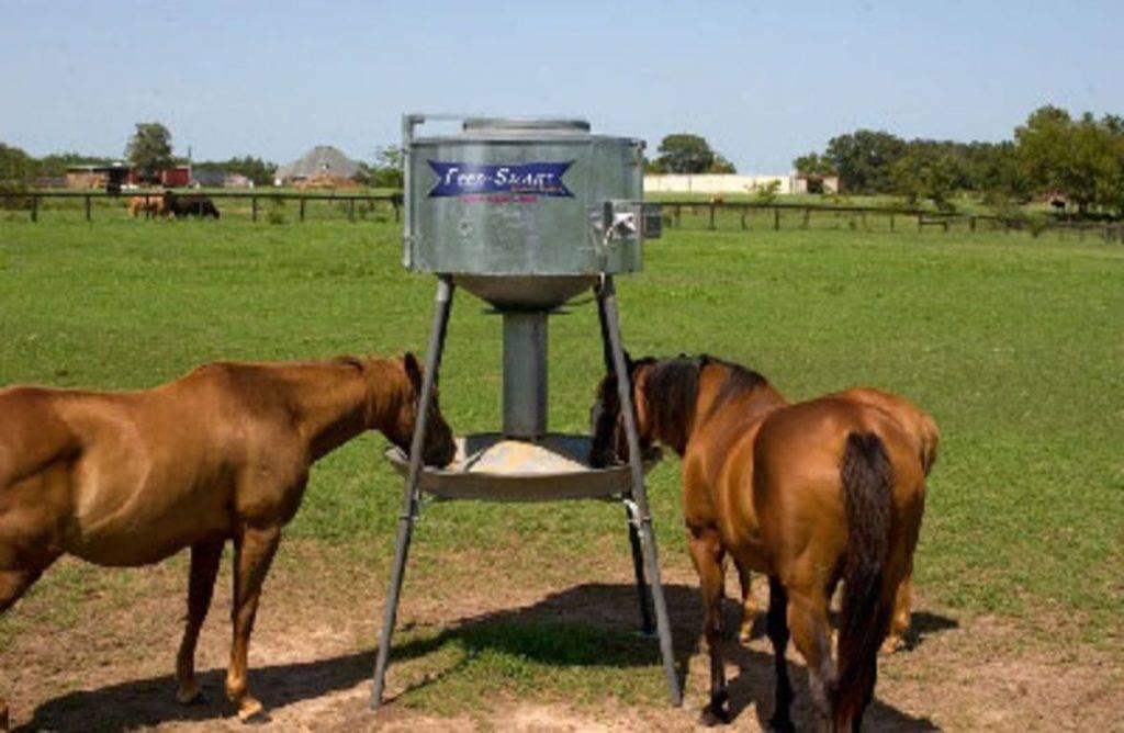 Что едят дикие и домашние лошади?