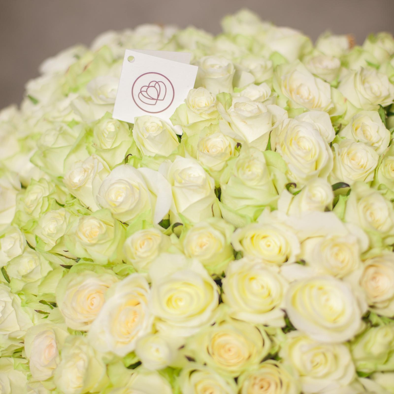 Белые розы: лучшие сорта, особенности выращивания и применения в ландшафтном дизайне