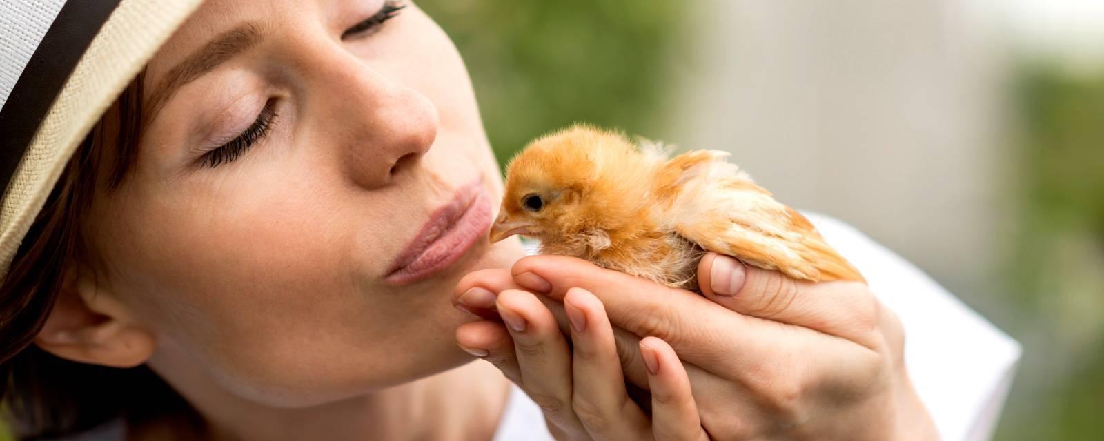 Чем пропоить цыплят в первые дни: профилактика заболеваний