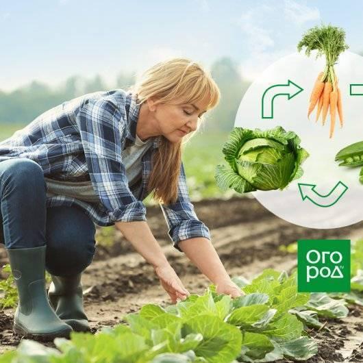 Соседство овощей на грядках в огороде: совместимость овощных культур при посадке