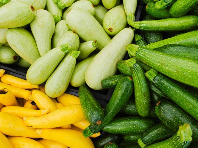 Выращивание кабачков в открытом грунте: посадка и уход