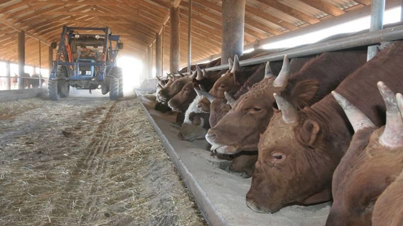 Разведение бычков на мясо, как бизнес: с чего начать, выгодно ли держать мини фермы, план, как поднять дело для начинающих в домашних условиях