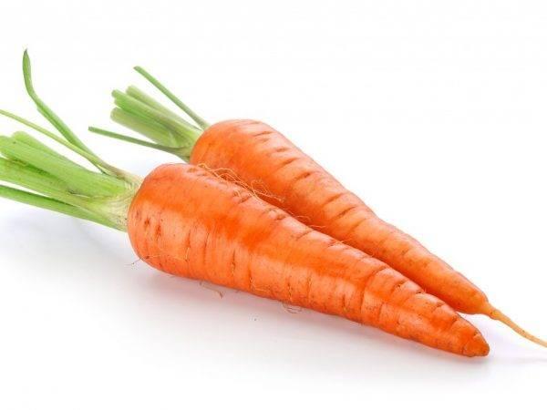 Сорт моркови королева осени: описание